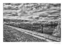 Tanaro il fiume dei vini-8